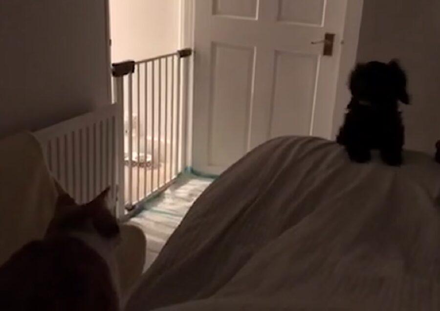 bella cucciola cockapoo letto terminato