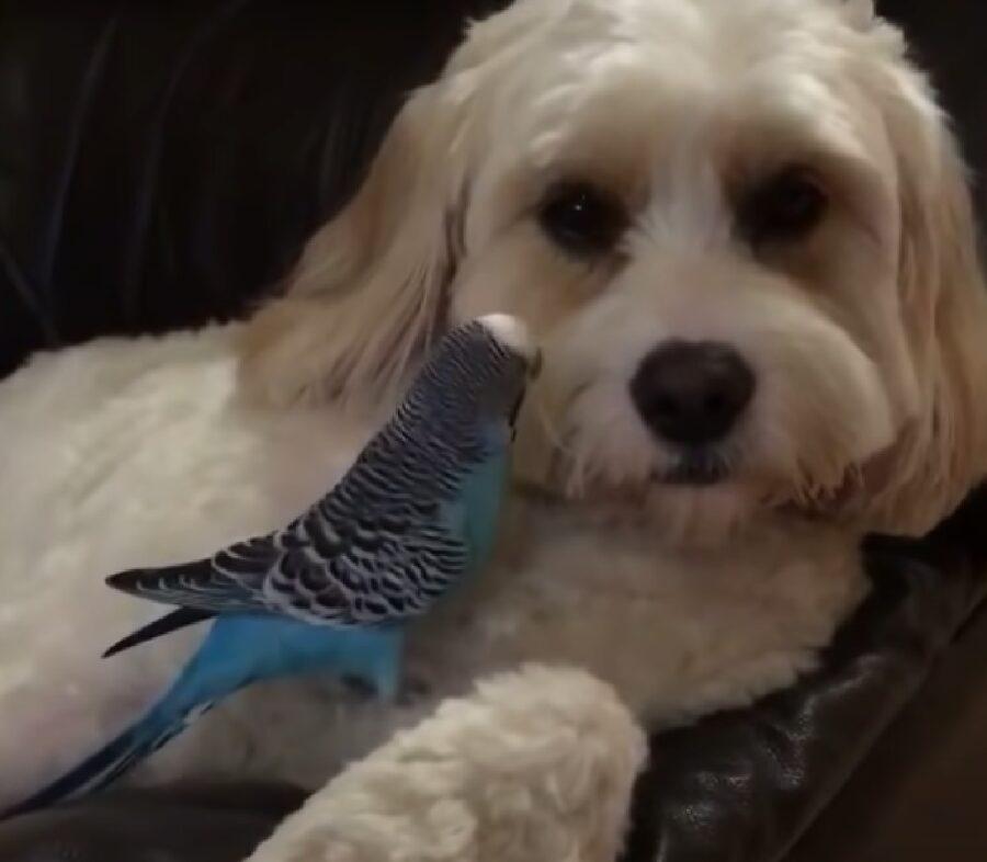 lucy affetto cucciola cane con uccellino