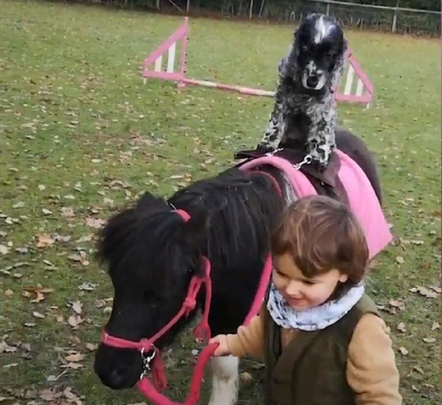 jenny cucciola un pony verity