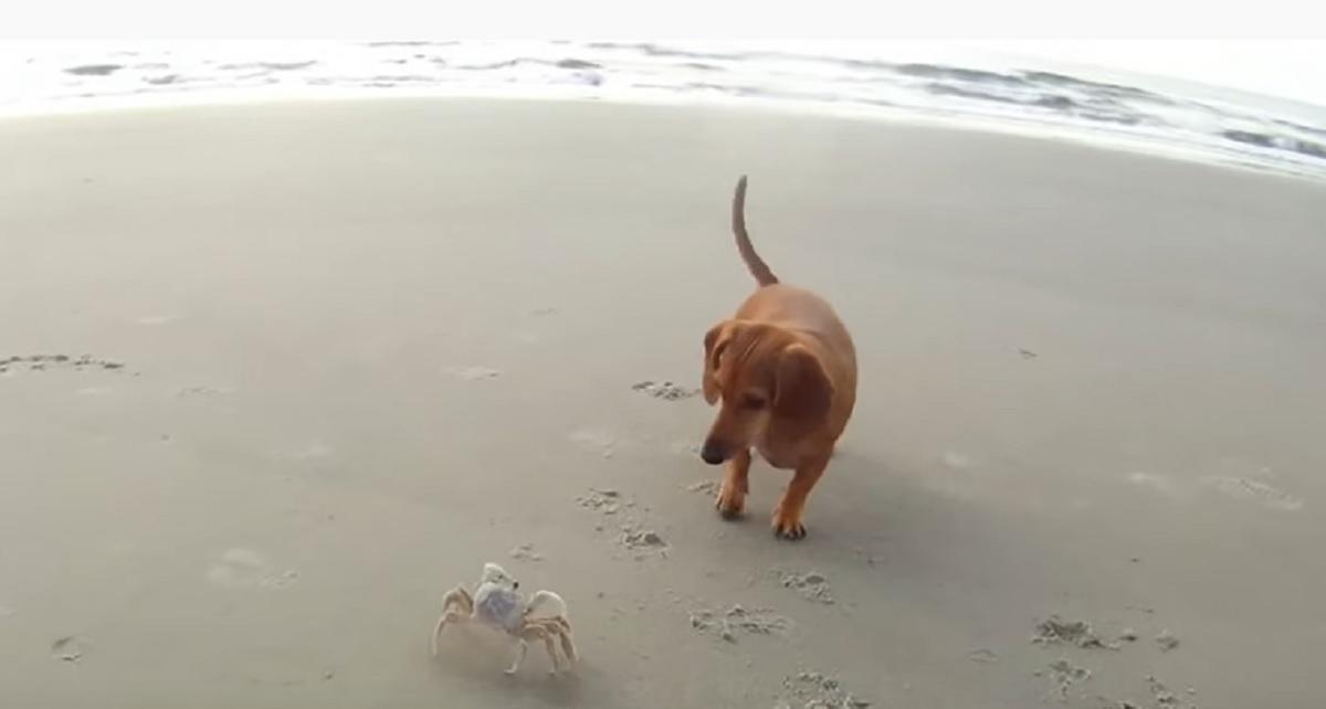 spiaggia cagnolina gioca