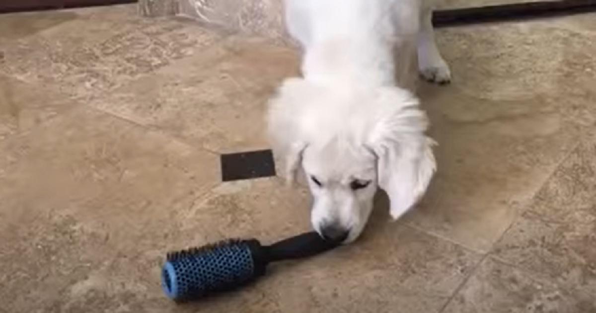 cucciola curiosa gioca
