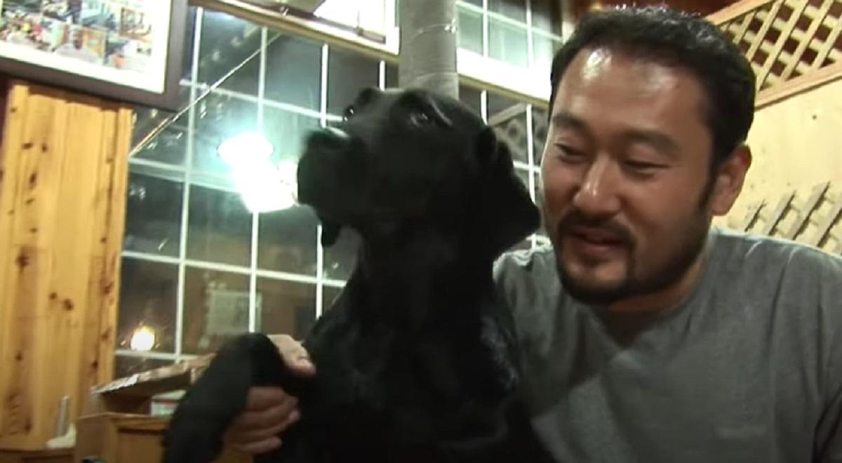 La cucciola Labrador è diventata l'aiutante perfetta per il ristorante, ciò che mostra il video è sbalorditivo