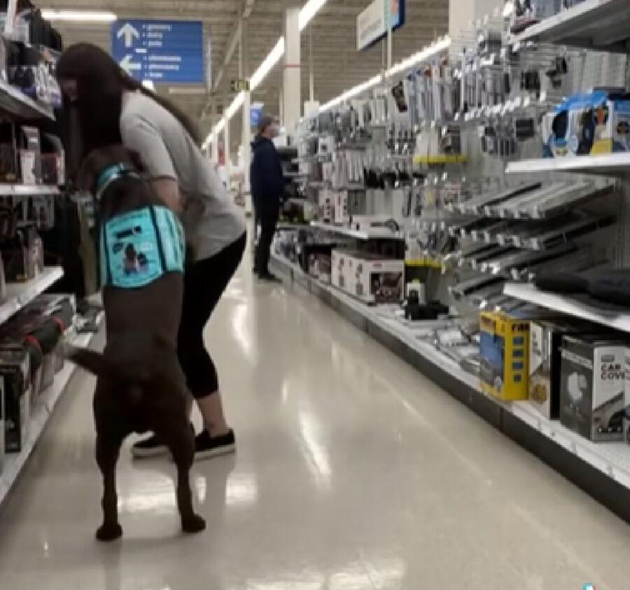 moose cucciolo labrador donna perde i sensi