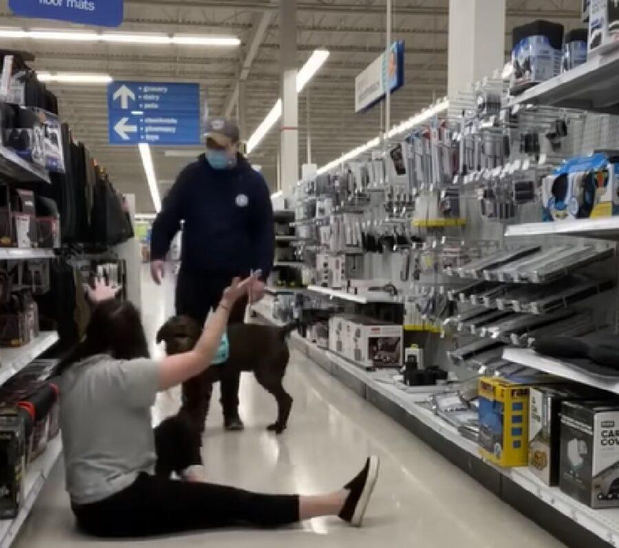 moose cucciolo labrador assistenza