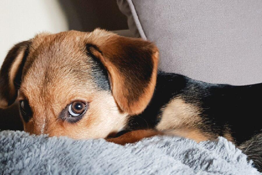 Non sgridare il cane, ecco perché è la mossa giusta