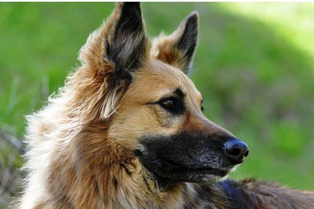 profilo di un cane