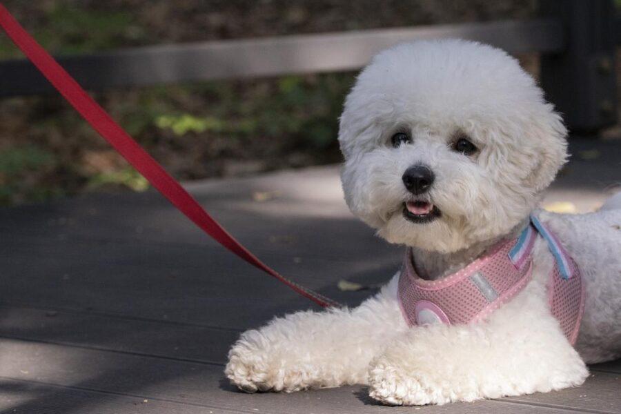 Portare a spasso un cane cieco: come farlo in tutta sicurezza