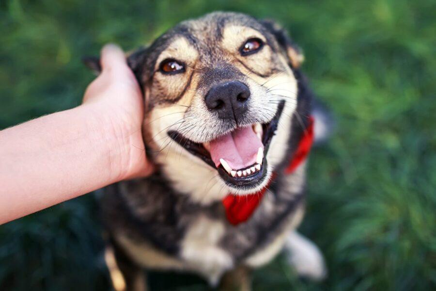 Quanto coccolare il cane per farlo stare bene senza però viziarlo?
