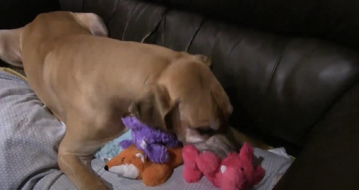 giocattoli bocca cane