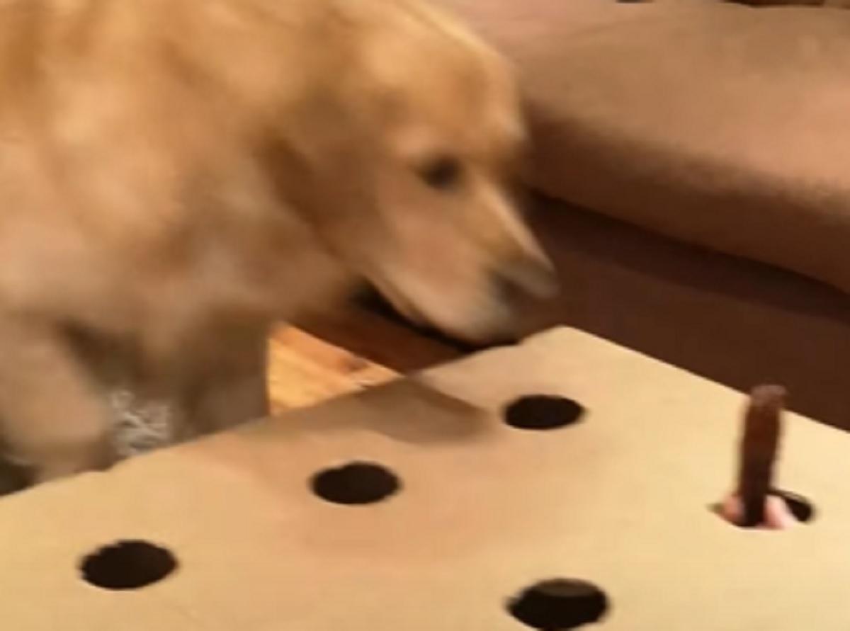 gioco cane prendere