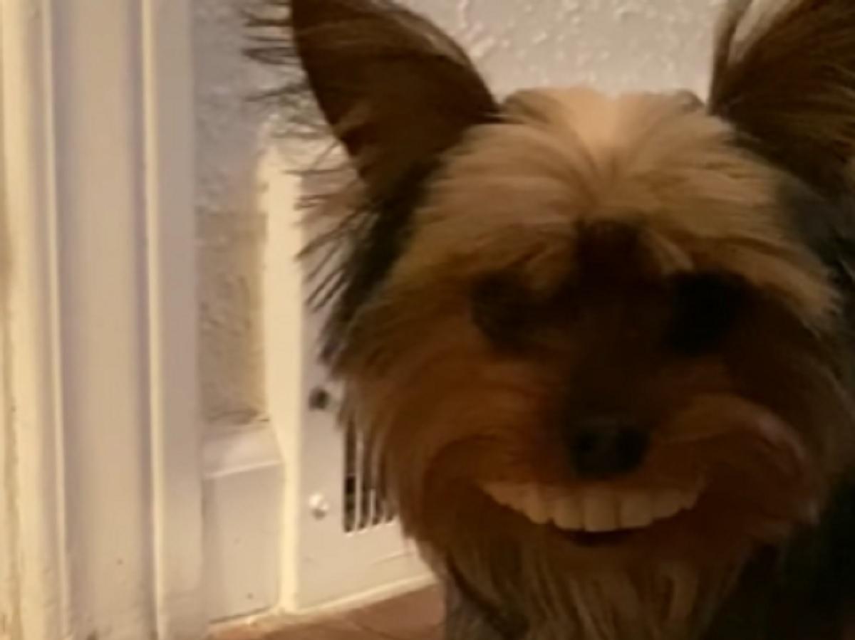 cucciolo cane denti