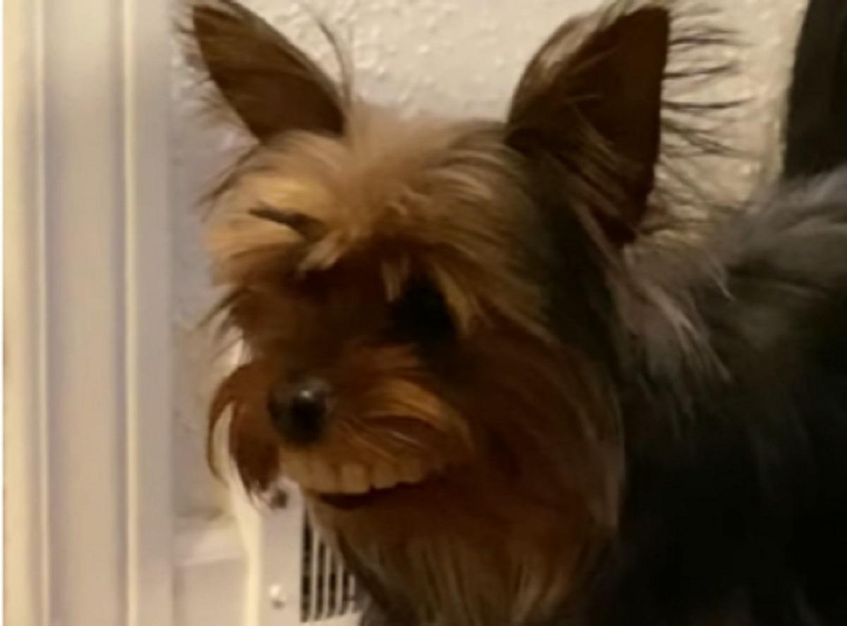 cagnolino thomas denti