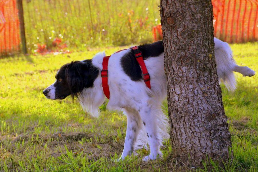 cane che fa la pipì su un albero