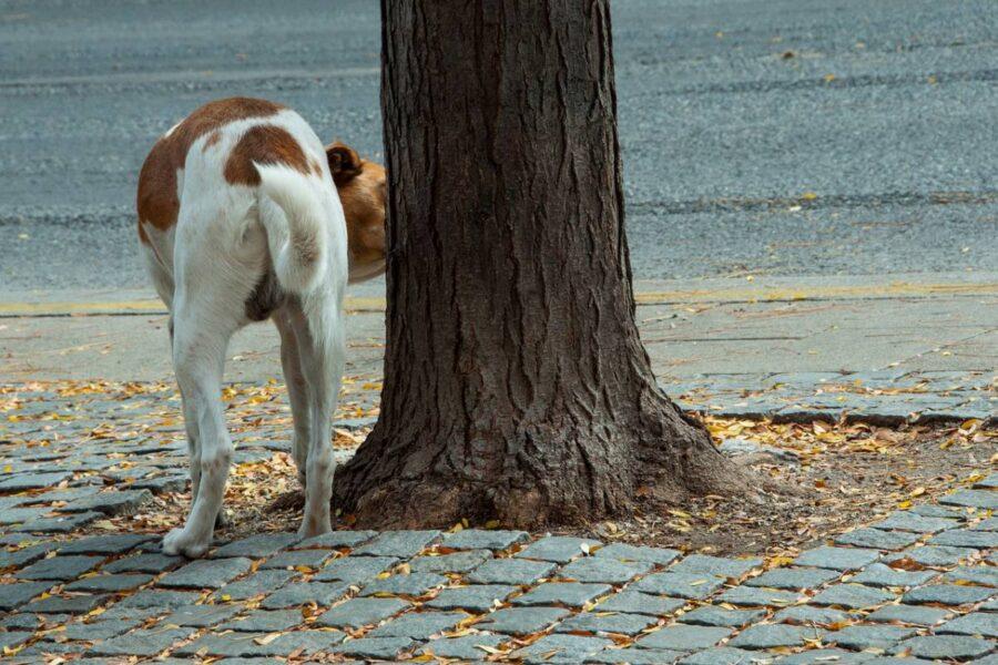 cane annusa il punto per fare pipì