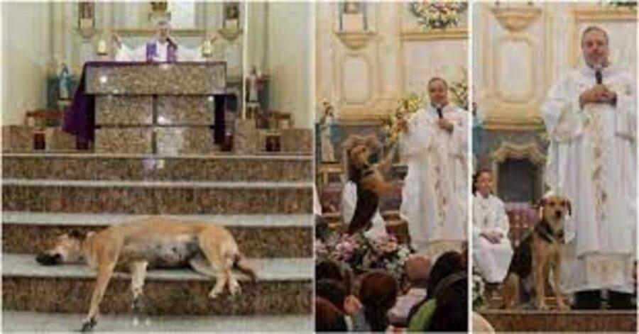 cani randagi presenti alla messa