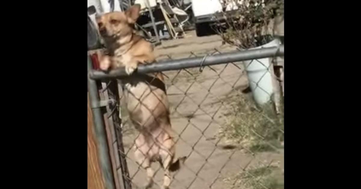 cane si arrampica su rete