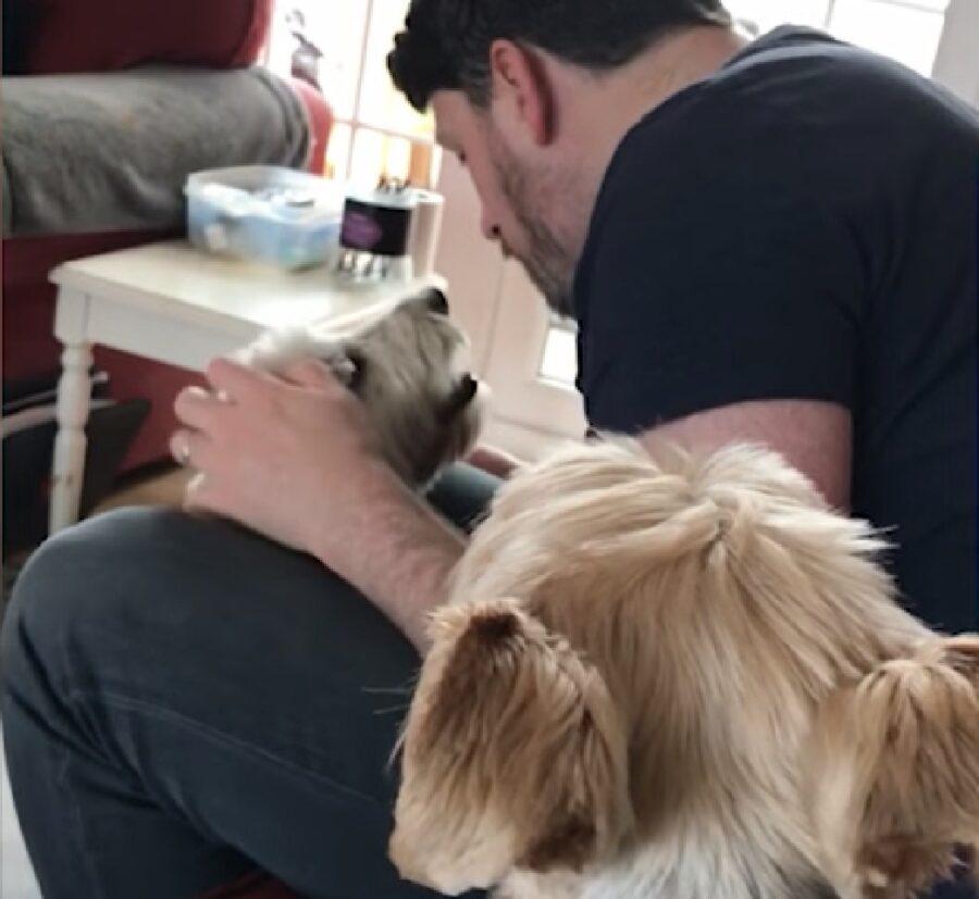 alfie cucciolo sean papà attenzioni