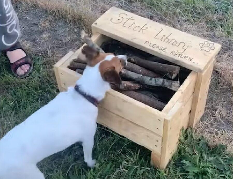 andrew cuccioli cane bastoni divertiemento