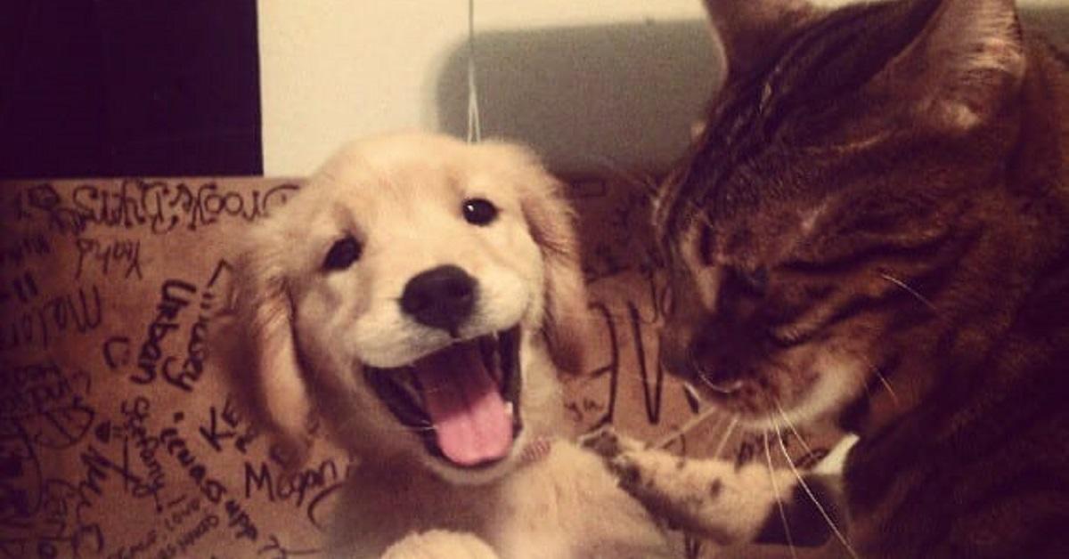 Vivere con un Golden Retriever: 10 foto riassunto