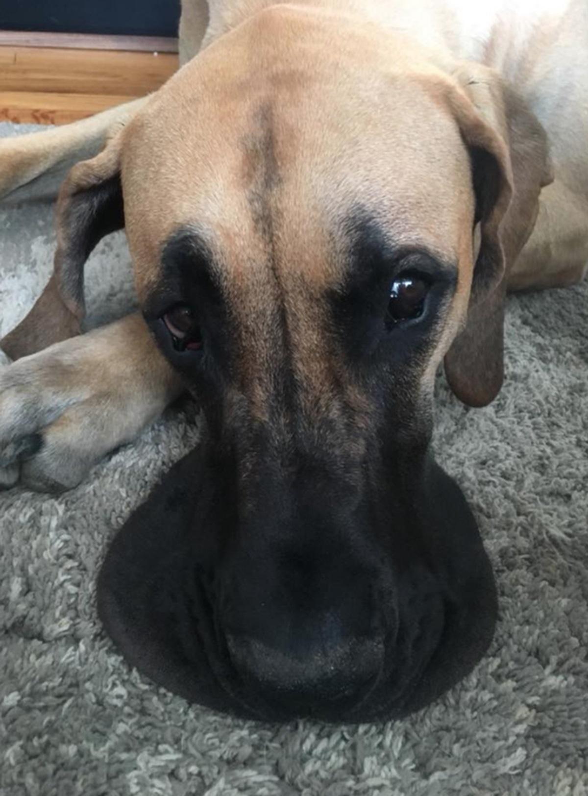 cane sul tappeto
