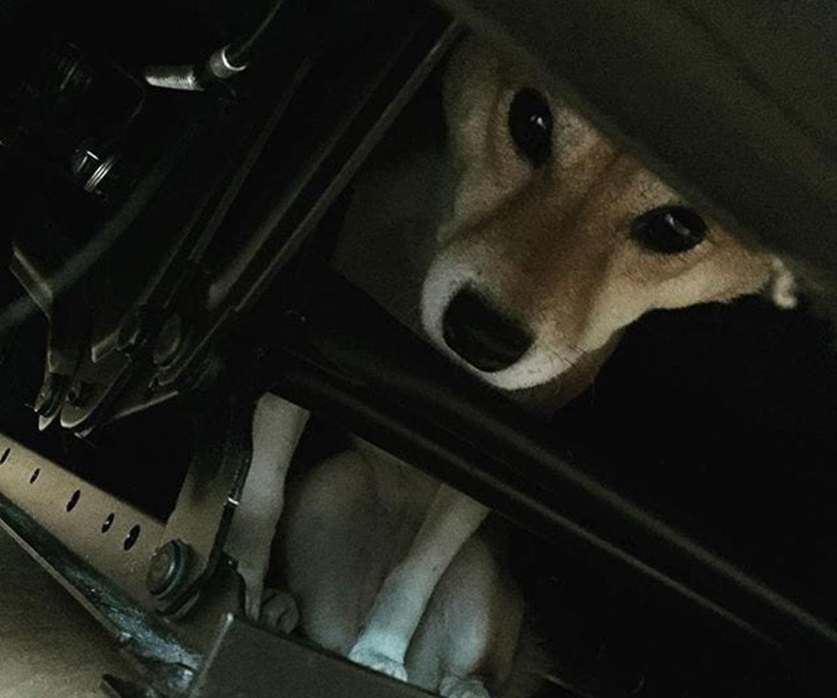 cane nell'auto
