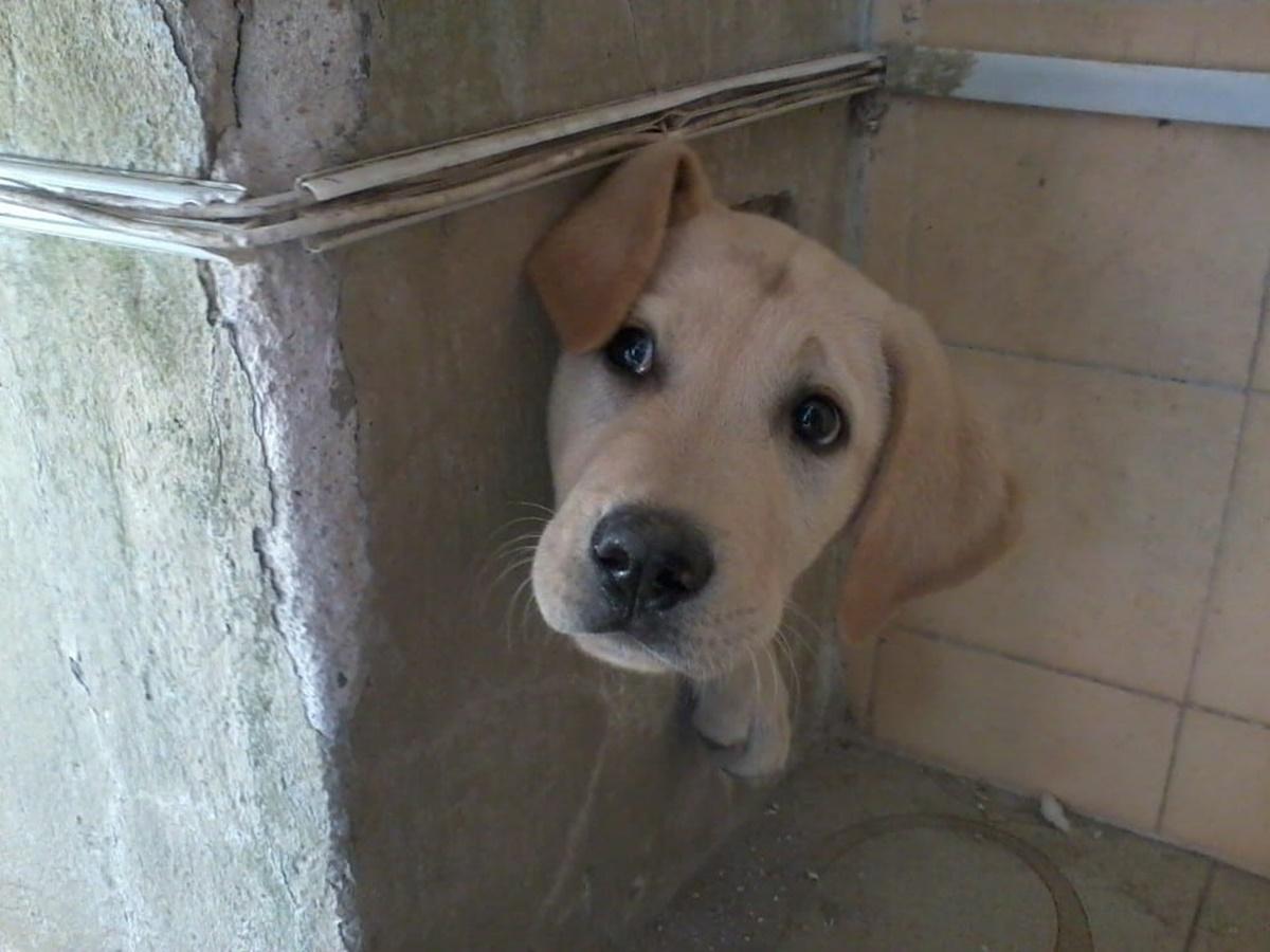 cane in unbuco del muro
