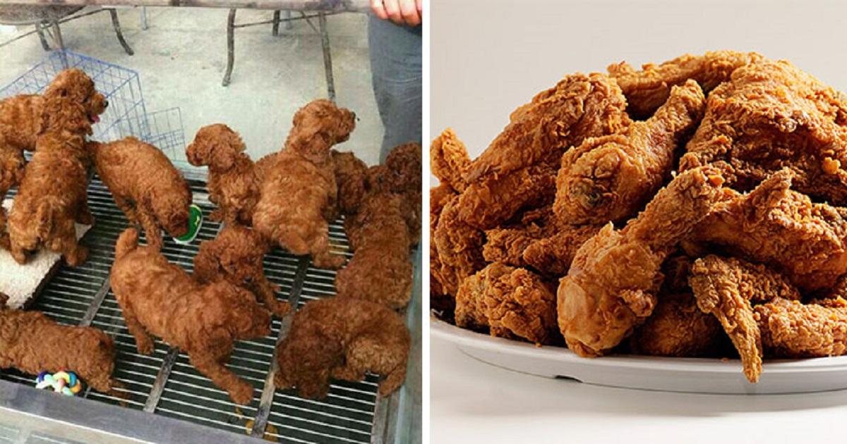 cagnolini o polletti?
