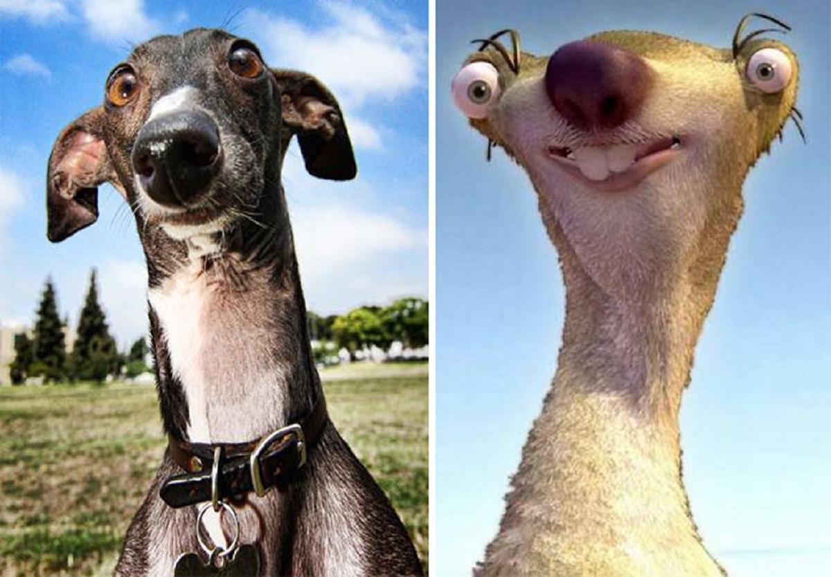 10 cani che somigliano ad altro-sid