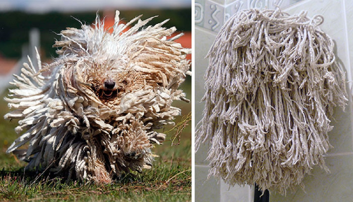 cane spazzolone