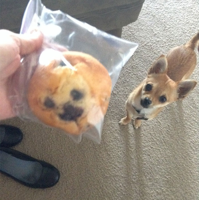 cane biscotto