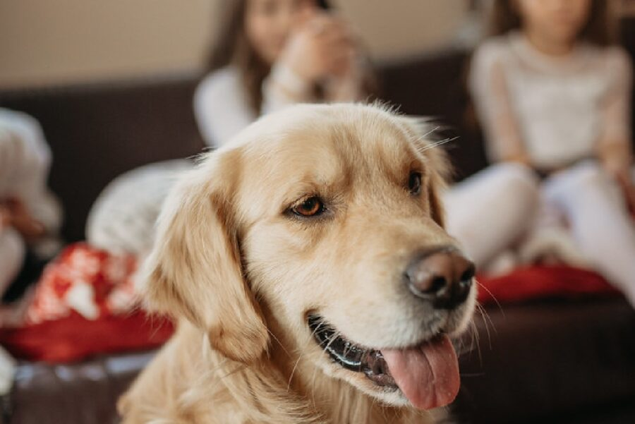 cane casa pericoli