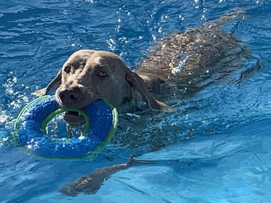 nuoto cane abilità
