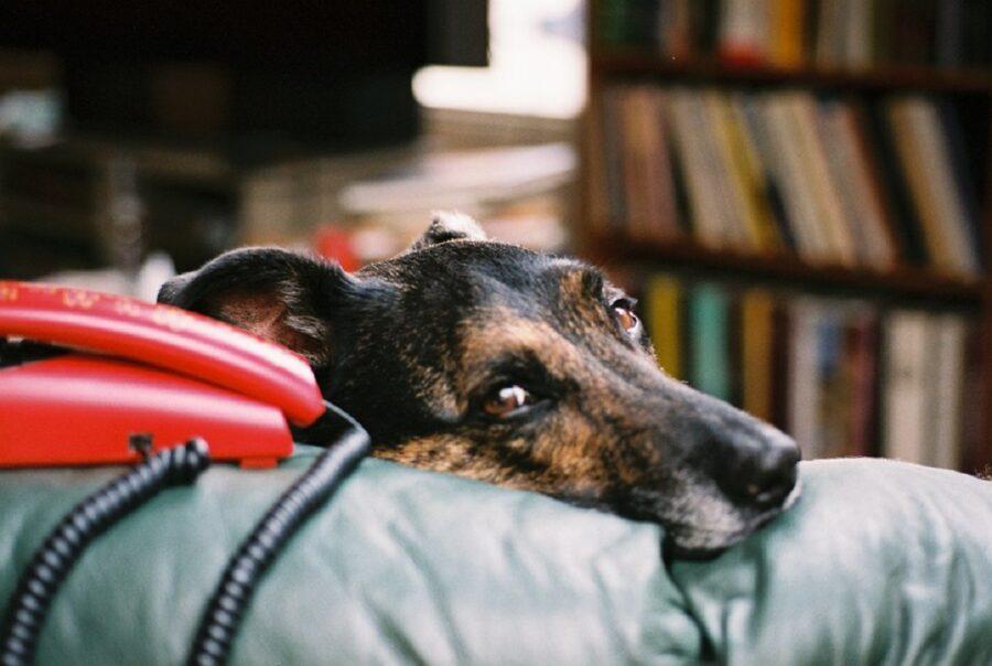 cane triste foto