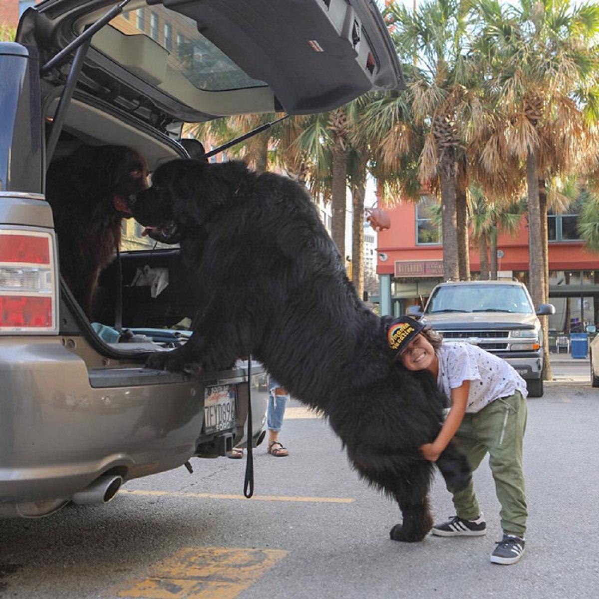 10 foto di cani grandi-macchina