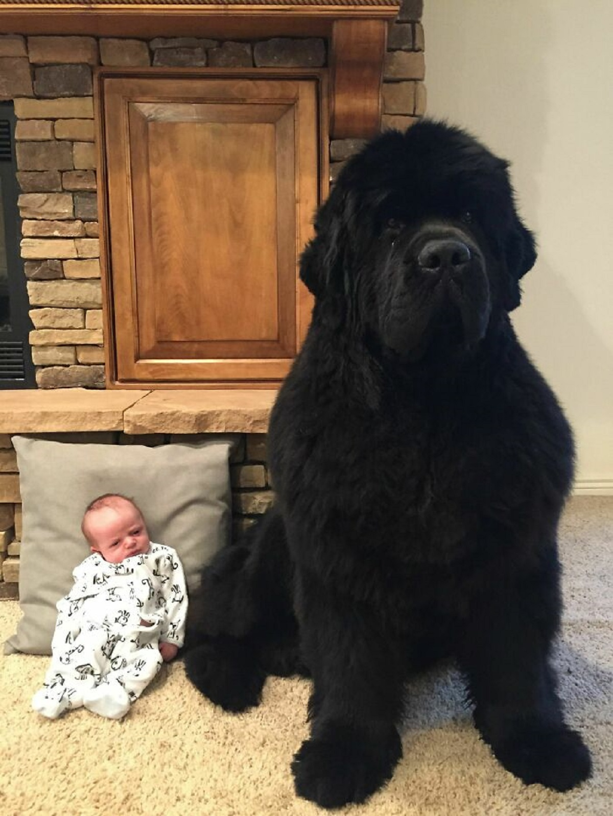 10 foto di cani grandi-guardia