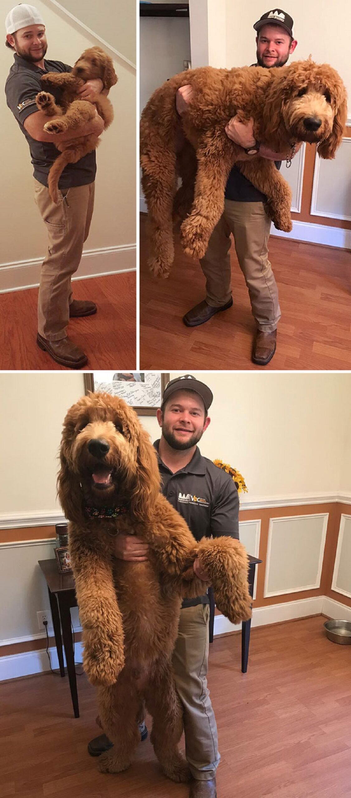 10 foto di cani grandi-1 anno