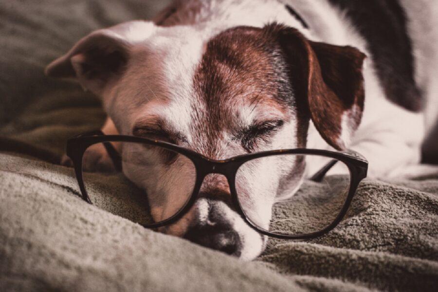 dormire cucciolo cane