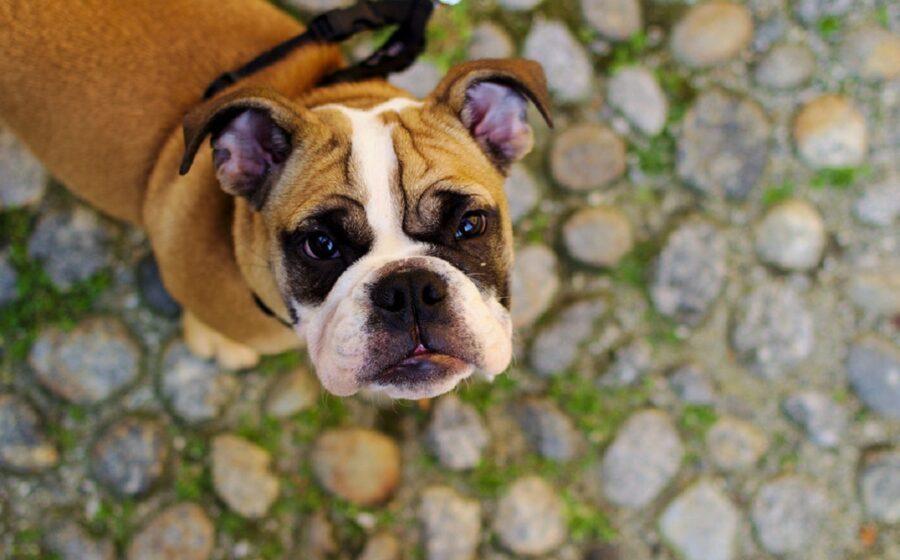 cane addestramento trucchi