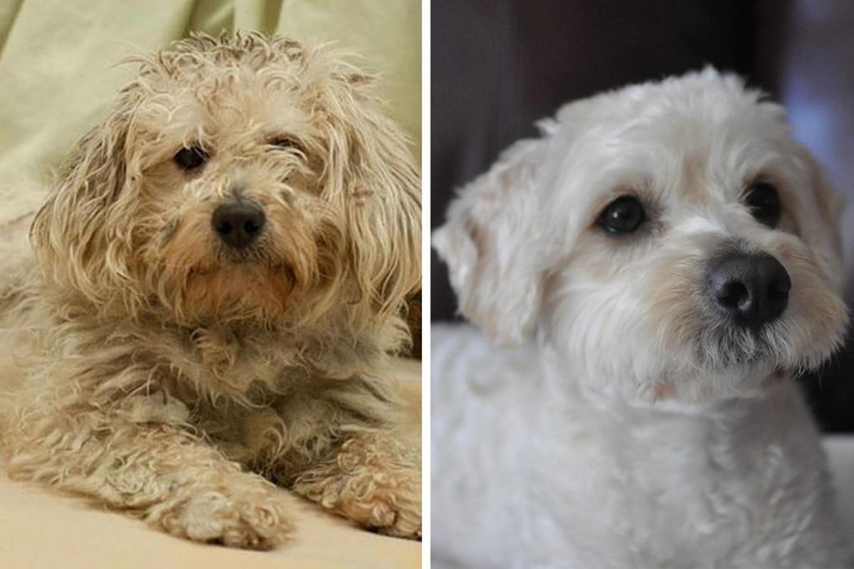 10 prima e dopo di cani adottati-Jake