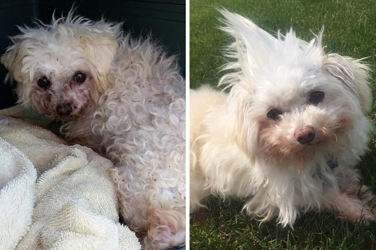 10 prima e dopo di cani adottati-Daffy