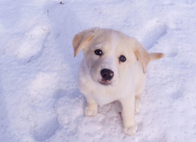 cane neve dolce