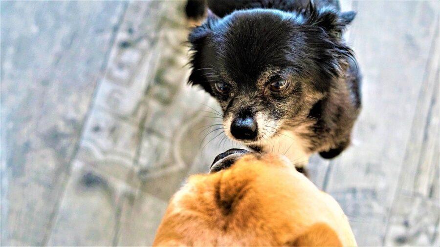 cane odora amico