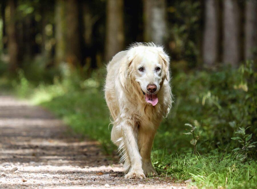 cane cucciolo foto