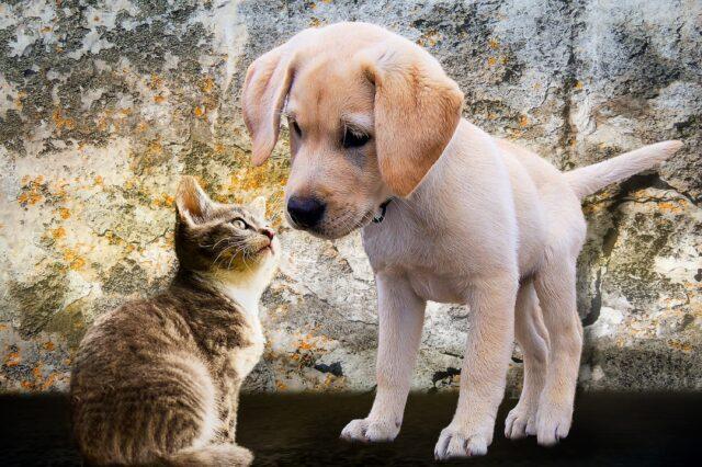 cane cucciolo gatto