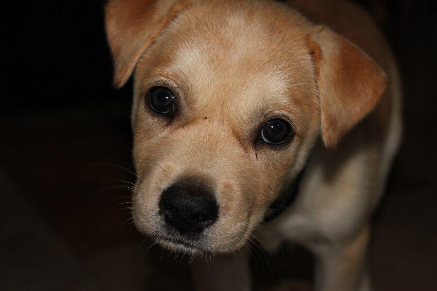 cane cuccioletto dolce