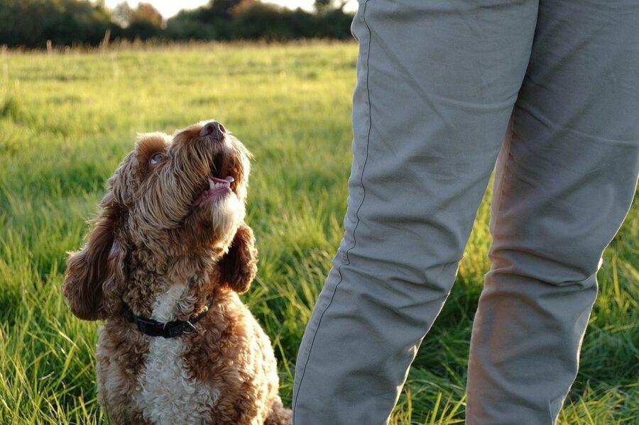 rinforzo positivo cane