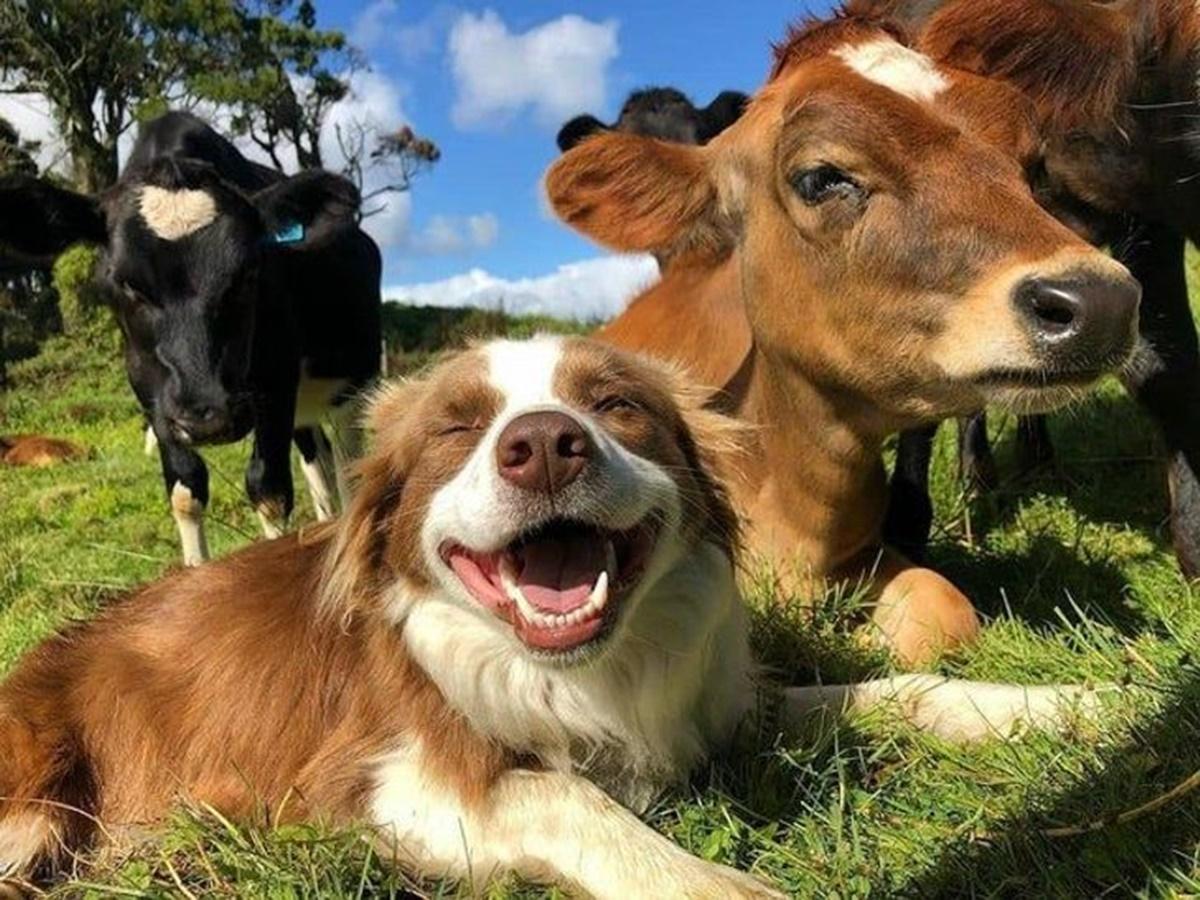 cane sul prato con le mucche