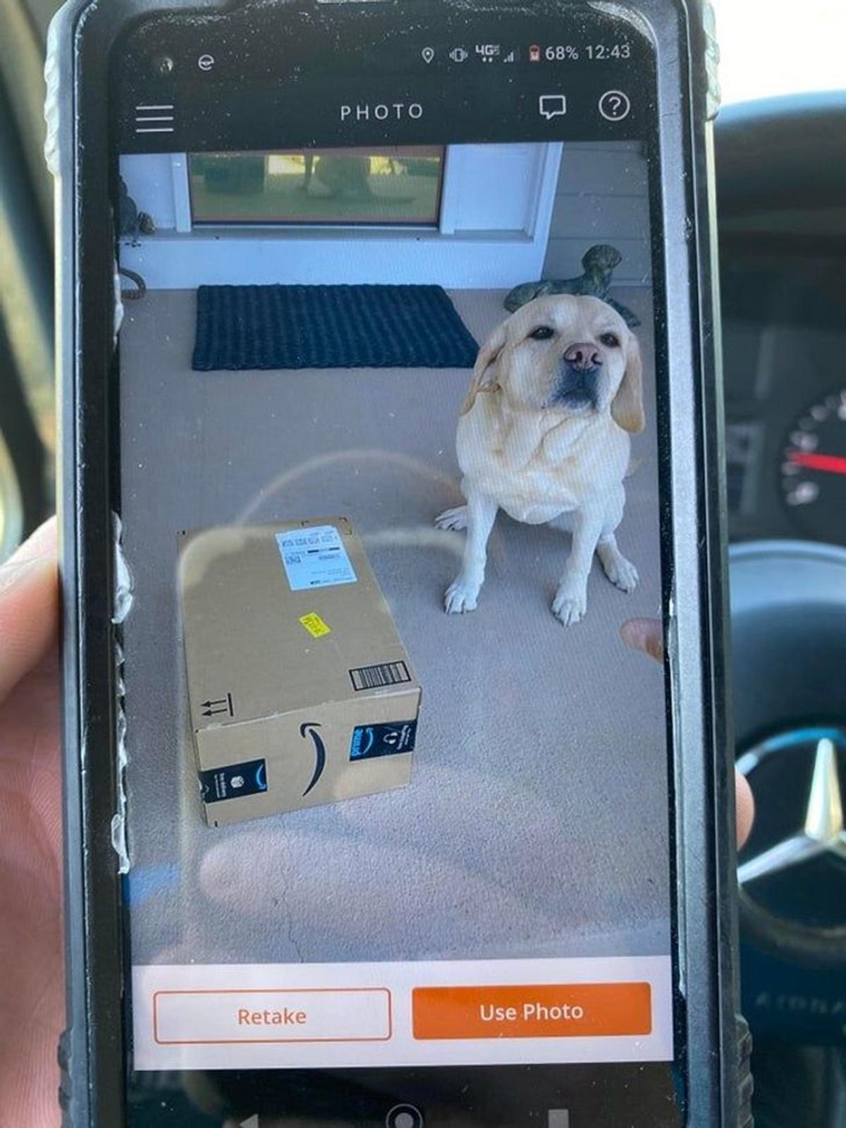 cane con pacco corriere