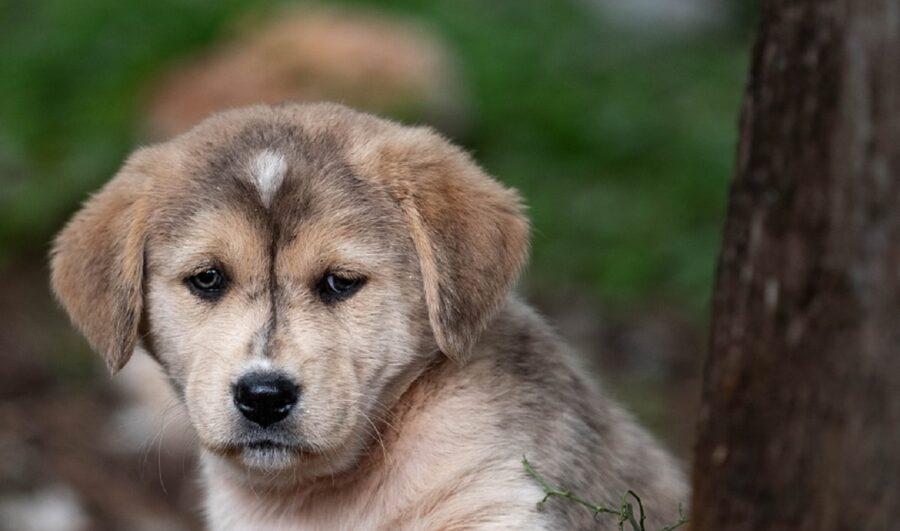 cane triste espressione