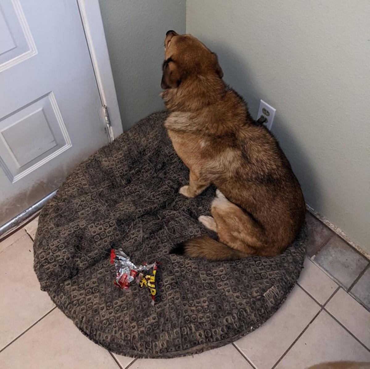 Cane con faccia al muro